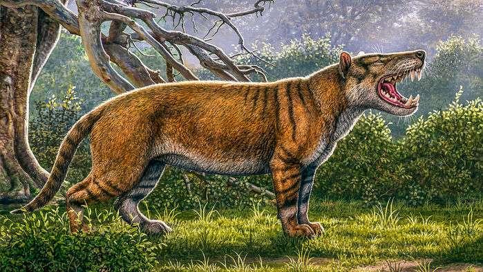 Le fossile d'un des plus grands mammifères carnivores du monde découvert au Kenya