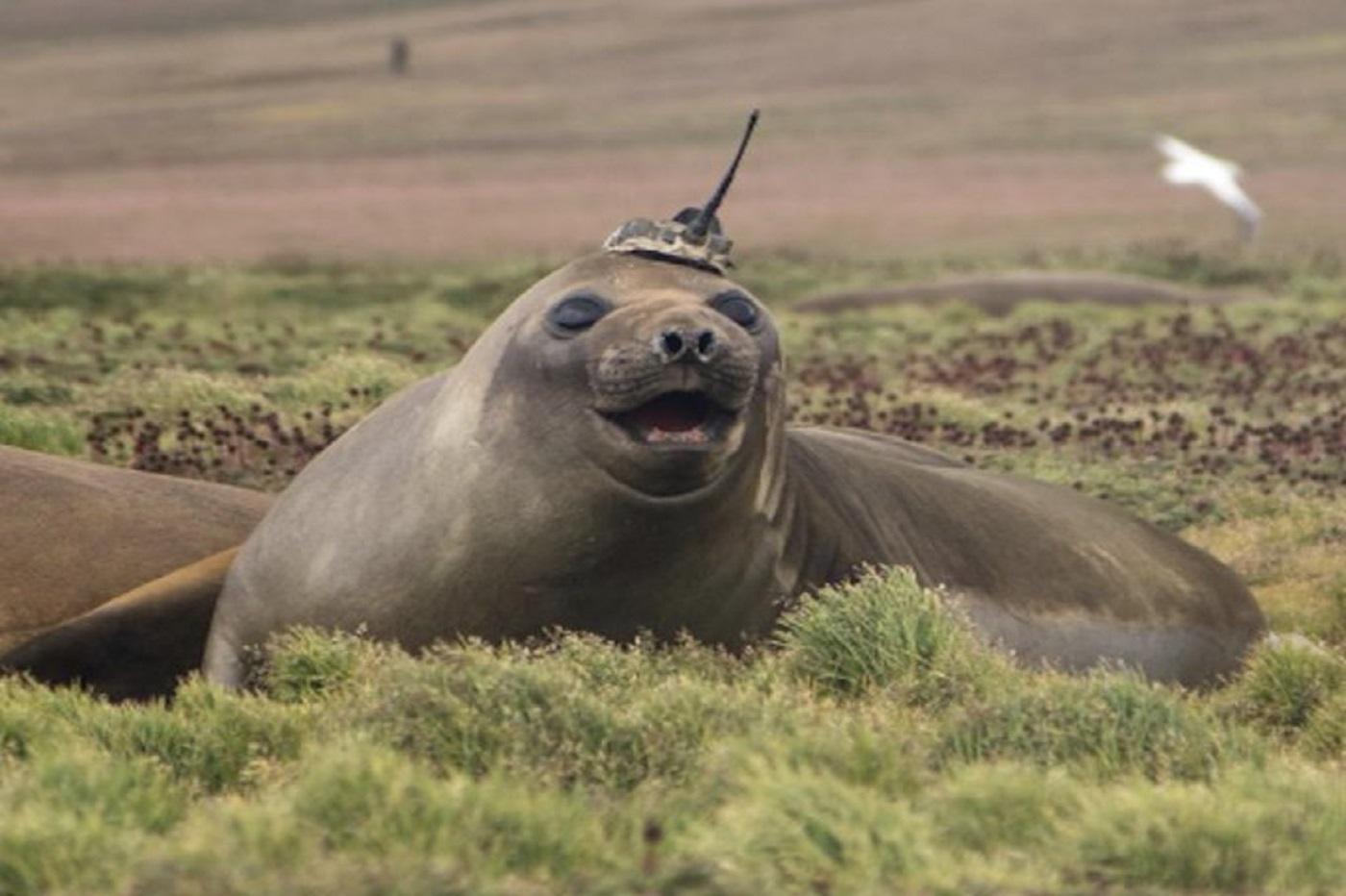 Quand un phoque permet à la NASA de mieux comprendre les effets du réchauffement climatique